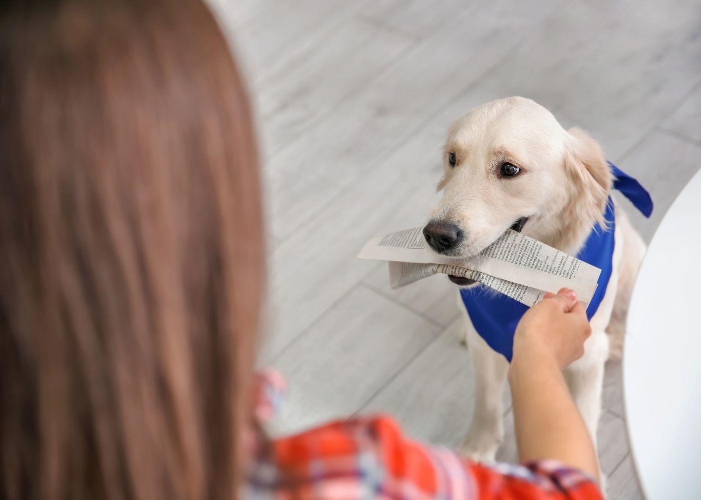 Asistenční pes | Canva