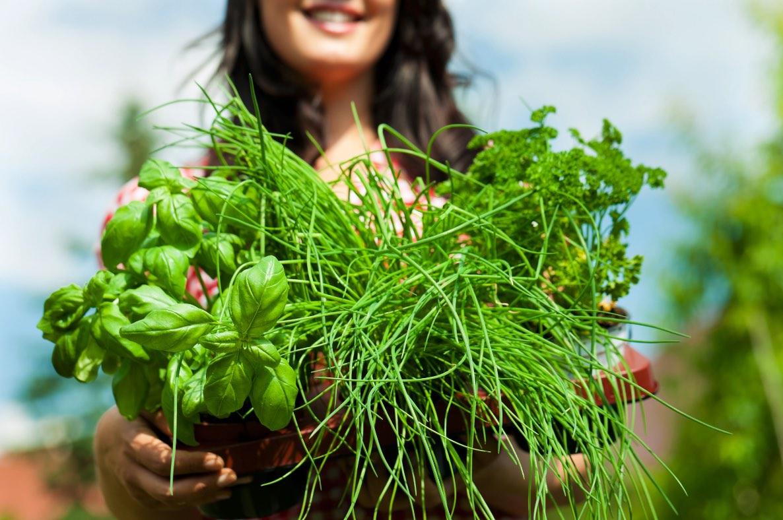 Camva | bylinky proti stresu