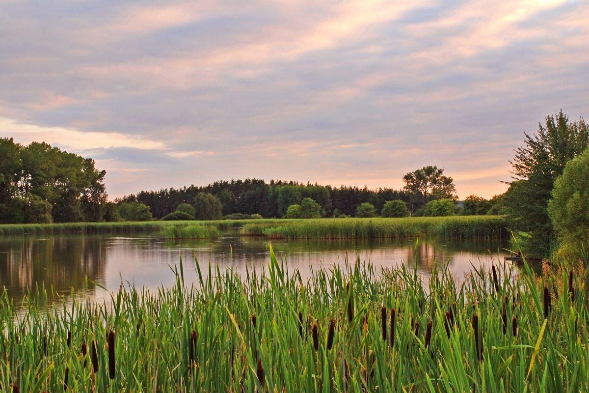 jihočeské rybníky | Canva